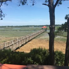 5 Reasons Disney's Hilton Head Island Resort is great for families!