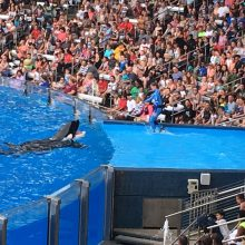 3 reasons to visit SeaWorld on your Orlando Vacation